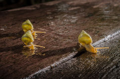 Small white snails Royalty Free Stock Image