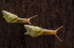 Small white snails Stock Photo