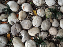 Small White stone with tree. In the garden, Thailand Stock Photo