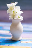 Small white vase with jasmine in it on a bright backgroung Stock Images
