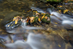 A small white water stream with fall leaves. Royalty Free Stock Photos