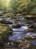 A small white water stream with fall leaves. Stock Photography