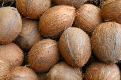 Small whole brown coconuts on retail market Stock Photo