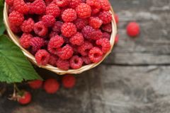 Small wicker basket with fresh ripe raspberries royalty free stock photography