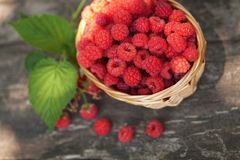 Small wicker basket with fresh ripe raspberries stock photography