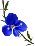 Small wild dark blue flower illustration Royalty Free Stock Photos