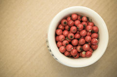 small wild red berries Royalty Free Stock Photo