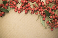 small wild red berries Stock Photo