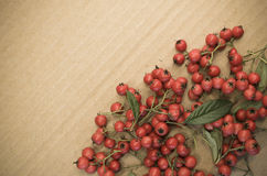 small wild red berries Royalty Free Stock Photos