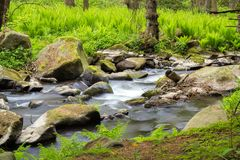 Small wild river in Bohemian forest Royalty Free Stock Images