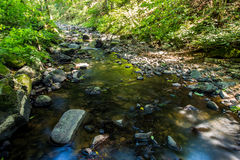 Small wild river in Bohemian forest Royalty Free Stock Photo