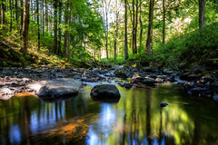 Small wild river in Bohemian forest Stock Image