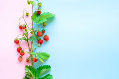 Small wild strawberry Stock Photography