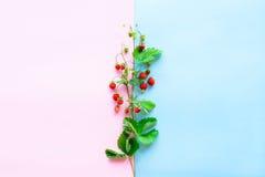 Small wild strawberry Royalty Free Stock Photos