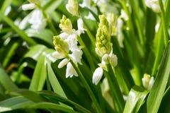 Small wild white flower Royalty Free Stock Photo