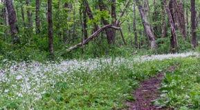 Small Wildflowers along Appalachian Trail Stock Photo