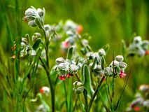 Small wildflowers. Beautiful small wildflowers on green background Royalty Free Stock Photos
