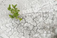 Small willow on a limestone soil Royalty Free Stock Images
