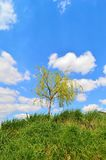 Small willow tree on a green hill Stock Photo