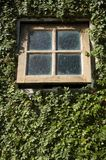 Small window. In a wall with creeper royalty free stock photography