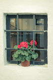 Small window with a flower. A small outdoor window with a red flower pot Stock Images