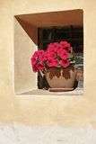 Small window with potted petunias Stock Photography