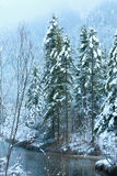 Small winter stream with snowy trees. Royalty Free Stock Images