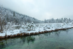 Small winter stream with snowy trees. Stock Images