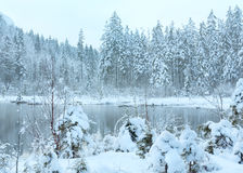 Small winter stream with snowy trees. Royalty Free Stock Image