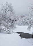 Small winter stream under snowbound trees under snow in winter. Stock Images