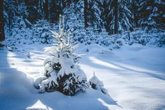 Small Winter Tree Stock Images