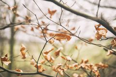 Leaves in winter royalty free stock photography
