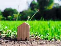 Small wood house on floor in front of rice field Royalty Free Stock Images