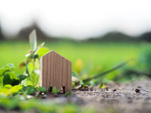 Small wood house on floor in front of rice field Royalty Free Stock Image
