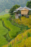 Small wood house in rice terrace Royalty Free Stock Image