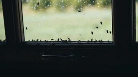 A small wooden box full of flies. A large cluster of insects. Scary atmosphere stock footage