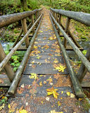 Small wooden bridge along an Oregon forest trail Royalty Free Stock Photos