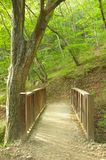 Small wooden bridge in beautiful forest Stock Images