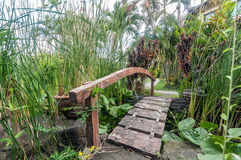 Small wooden bridge. Detail of small wooden bridge over rivulet located in the park in Bali, Indonesia Royalty Free Stock Photography