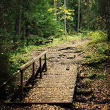 Small wooden bridge in the forest. Valaam island. Stock Image