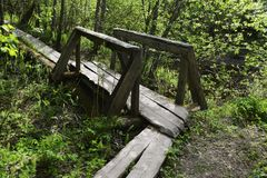 Small wooden bridge in the forest Royalty Free Stock Image