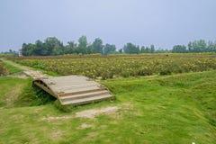 Small wooden bridge near flower farmland Royalty Free Stock Image
