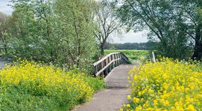 Small wooden bridge over a small creek. It is in the beginning of the spring season. Trees got new leaves and the wildflowers are blooming now Stock Image