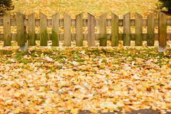 Small wooden fence and  yellow leaves of autumn Royalty Free Stock Image