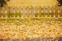Small wooden fence and  yellow leaves of autumn. Small wooden fence and a lot of yellow fallen leaves of autumn Royalty Free Stock Image