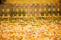 Small wooden fence and yellow leaves of autumn Stock Photo