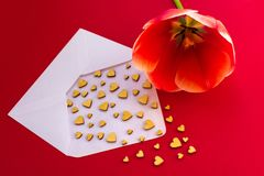 Small wooden hearts fly out of a white envelope on a red background and a red tulip. Vbanneralentine`s Day. Love concept. Gift, me stock image