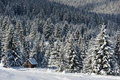 Small wooden house at the forest edge in sunny day. Stock Images