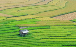 Small wooden house on the rice fields in Hagiang, Vietnam Stock Images