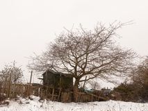Small wooden shed tree winter snow field outside white sky nature background. Essex; england; uk royalty free stock photo